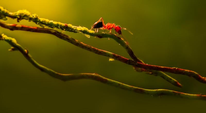 Bugs and Beetles - 133.jpg