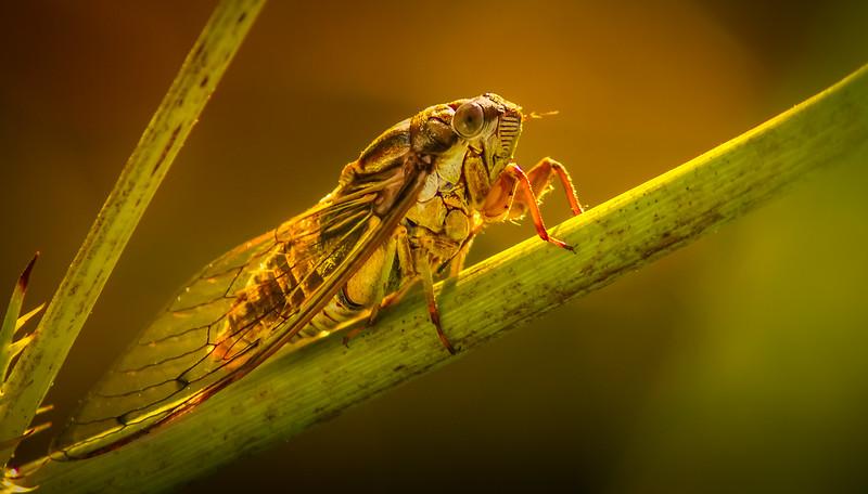 Bugs and Beetles - 81.jpg