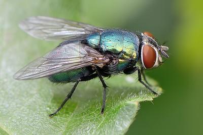A fly at Decoy Heath