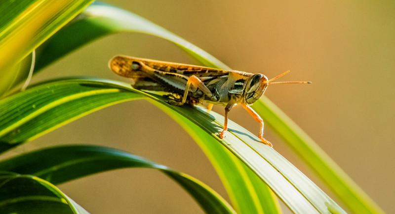 Bugs and Beetles - 60.jpg