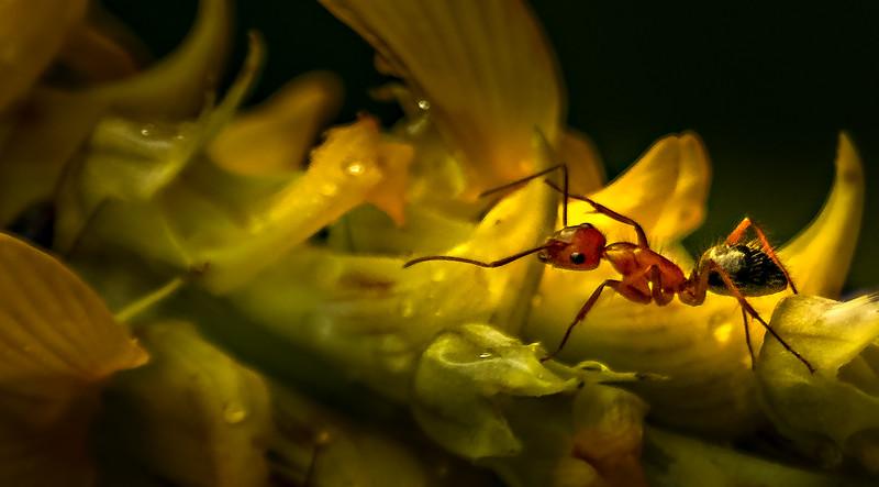 Bugs and Beetles - 43.jpg