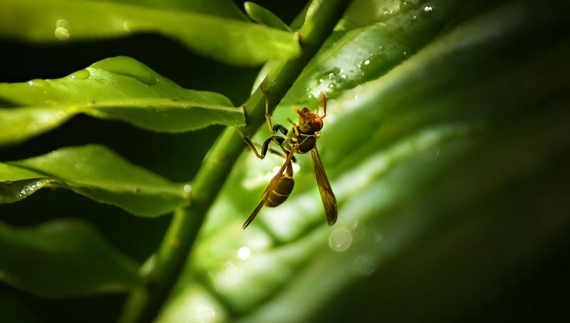 Bugs and Beetles - 198.jpg