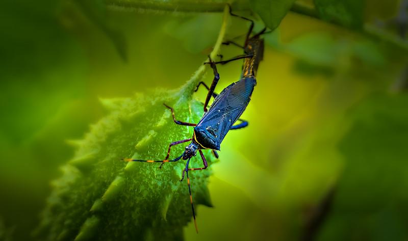 Bugs and Beetles - 46.jpg