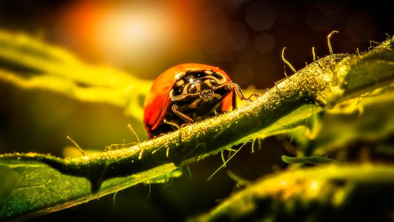 Bugs and Beetles - 79.jpg