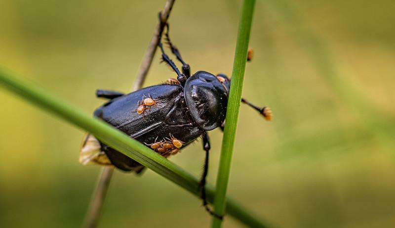 Bugs and Beetles - 17.jpg