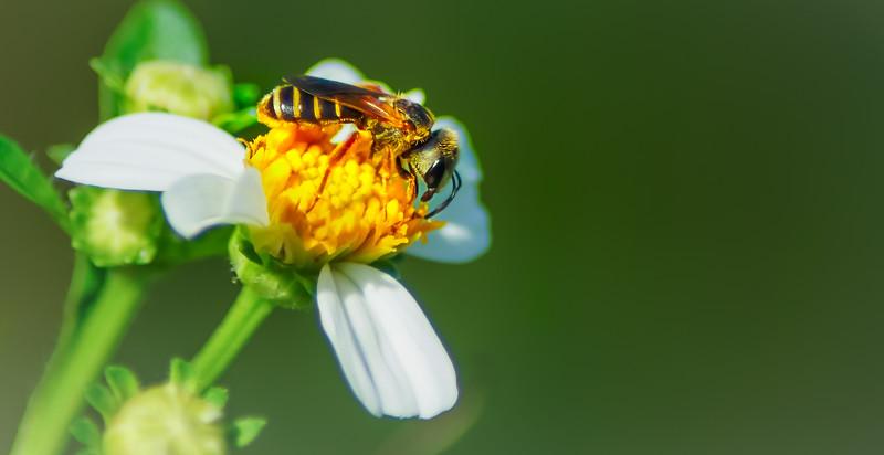 Bugs and Beetles - 150.jpg