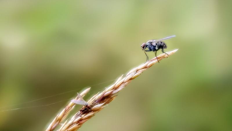 Bugs and Beetles - 25.jpg