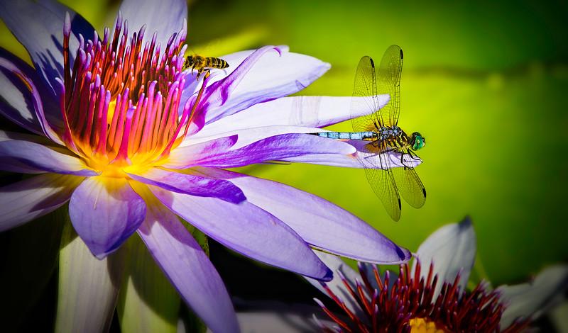 Bugs and Beetles - 63.jpg