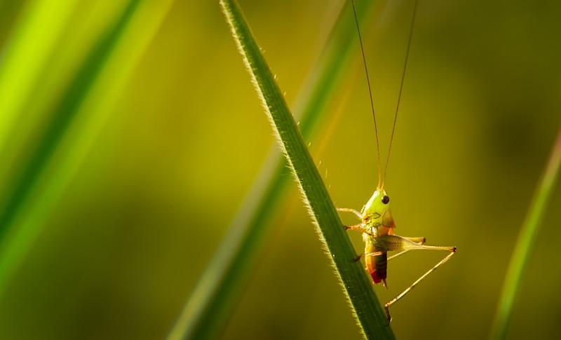 Bugs and Beetles - 159.jpg