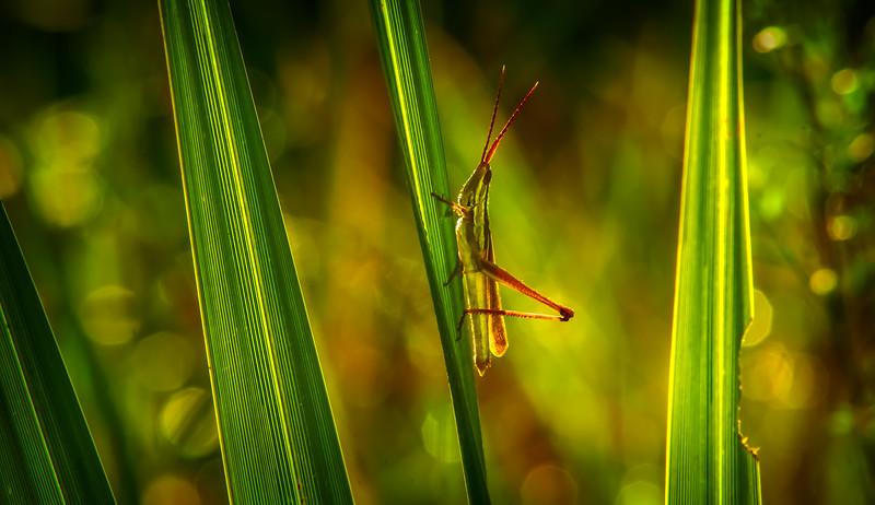 Bugs and Beetles - 127.jpg