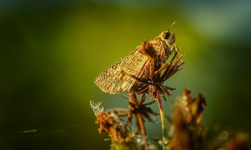 Ugly Bugs&Beautiful Beetles-202.jpg