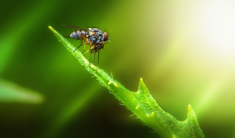 Bugs and Beetles - 187.jpg
