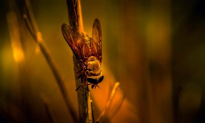 Bugs and Beetles - 170.jpg