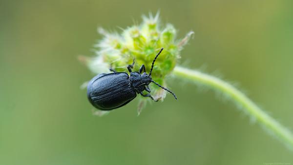 Beetle on Flower 2020