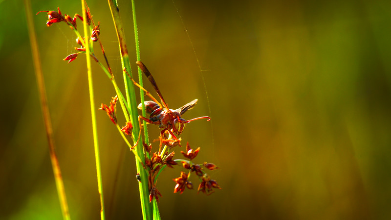 Bugs and Beetles - 123.jpg