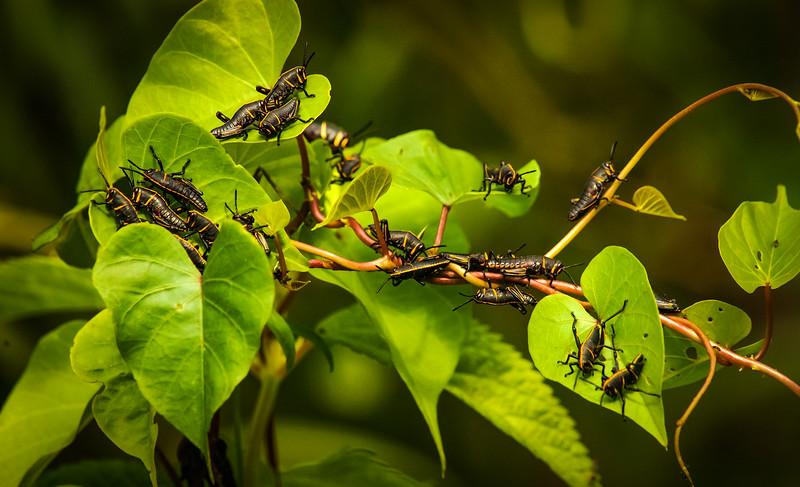 Bugs and Beetles - 58.jpg