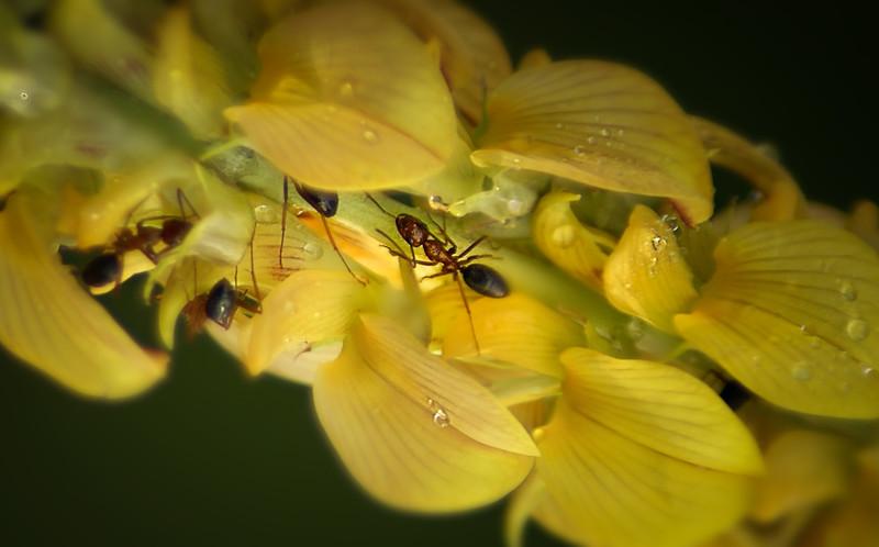 Bugs and Beetles - 41.jpg