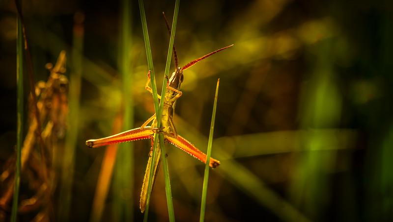 Bugs and Beetles - 124.jpg