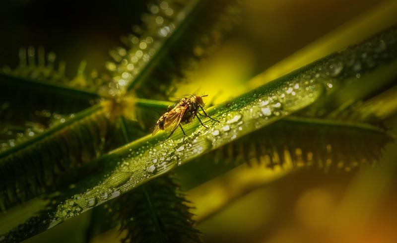 Ugly Bugs&Beautiful Beetles-204.jpg