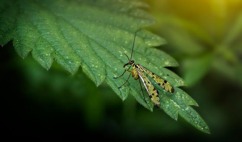 Bugs and Beetles - 9.jpg