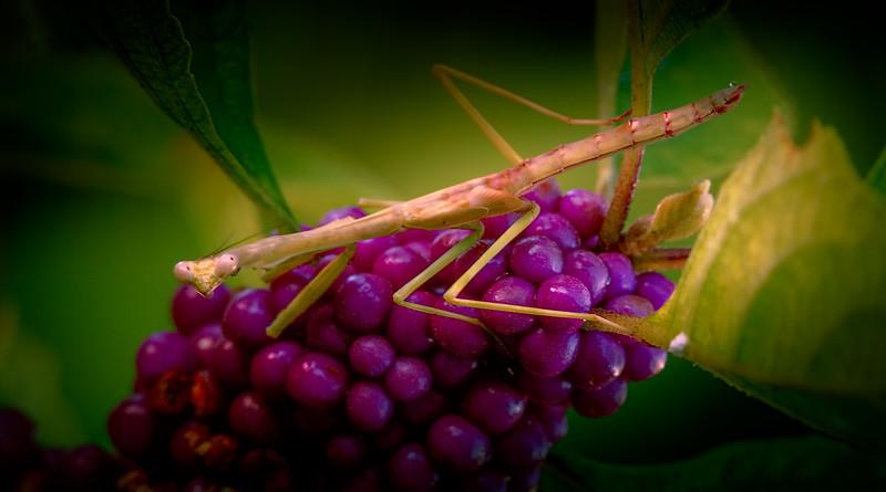 Bugs and Beetles - 162.jpg