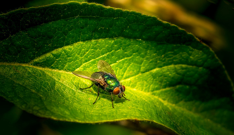 Bugs and Beetles - 20.jpg