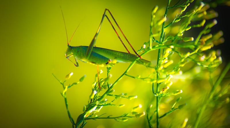 Bugs and Beetles - 157.jpg