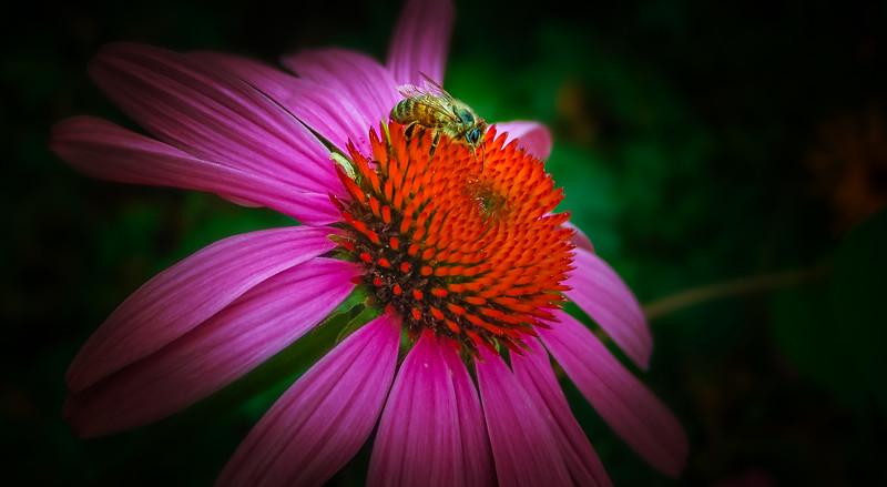 Bugs and Beetles - 24.jpg
