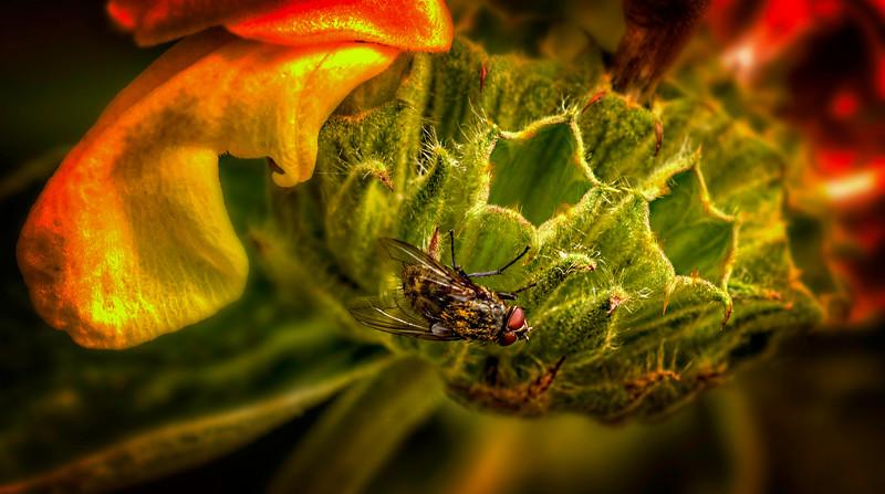 Bugs and Beetles - 191.jpg