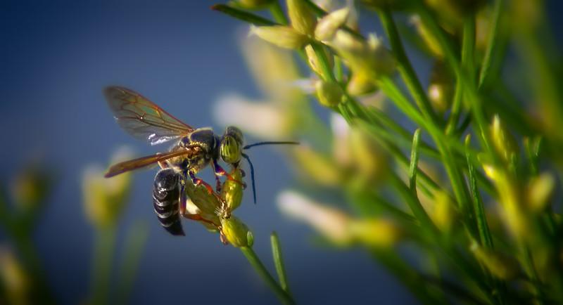 Bugs and Beetles - 149.jpg