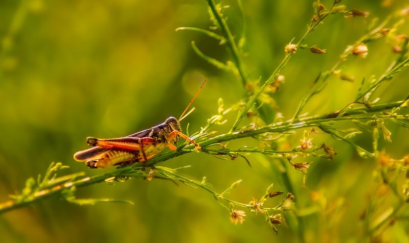 Bugs and Beetles - 153.jpg