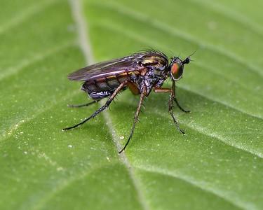Insect 11-06-2017-2 Kintbury