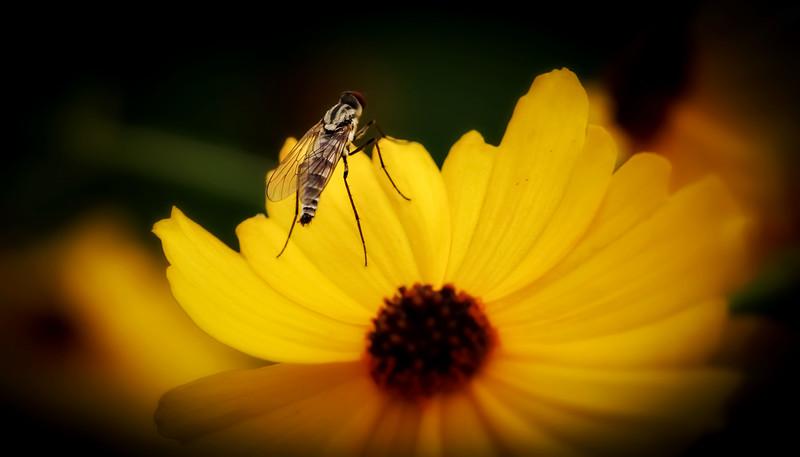 Bugs and Beetles - 196.jpg