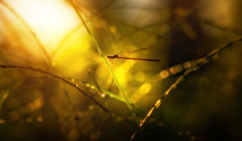 Ugly Bugs&Beautiful Beetles-210.jpg