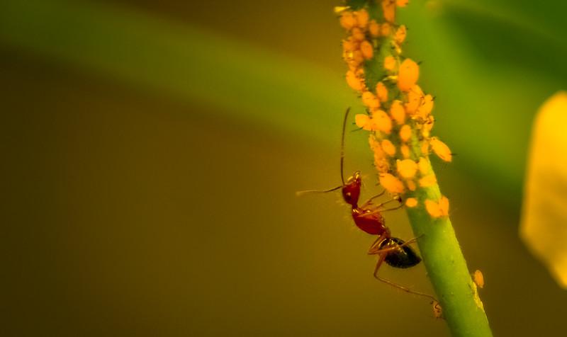 Bugs and Beetles - 197.jpg