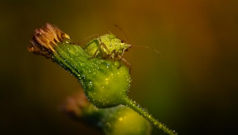 Ugly Bugs&Beautiful Beetles-208.jpg