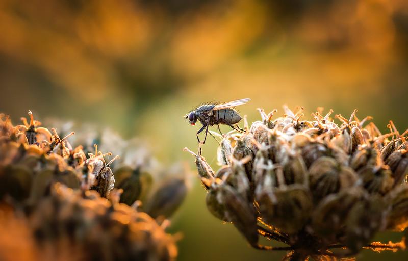 Bugs and Beetles - 6.jpg