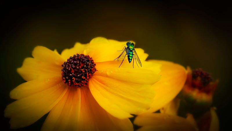 Bugs and Beetles - 163.jpg