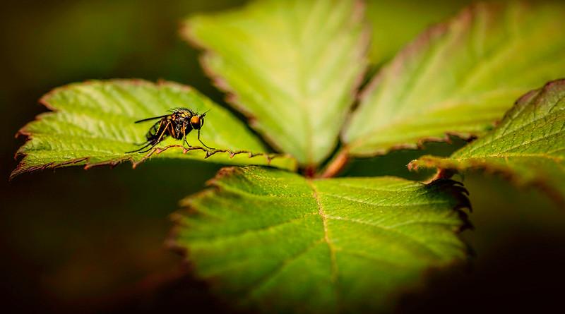 Bugs and Beetles - 181.jpg