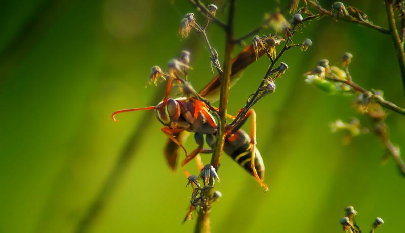 Bugs and Beetles - 152.jpg