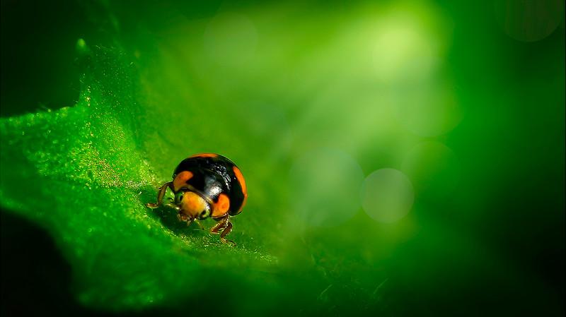Bugs and Beetles - 182.jpg
