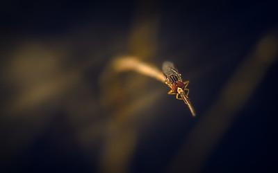 Ugly Bugs and Beautiful Beetles
