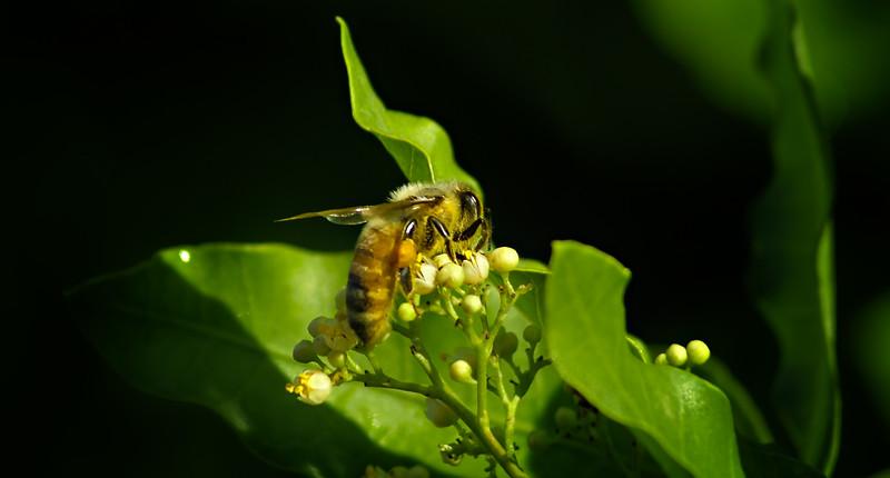 Bugs and Beetles - 67.jpg