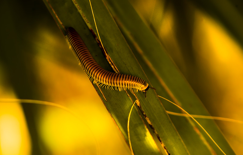 Bugs and Beetles - 147.jpg