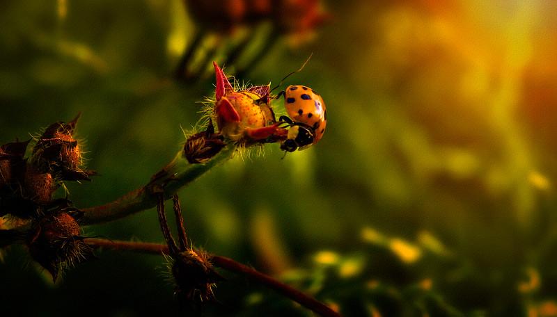 Bugs and Beetles - 93.jpg