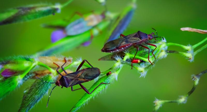 Bugs and Beetles - 189.jpg