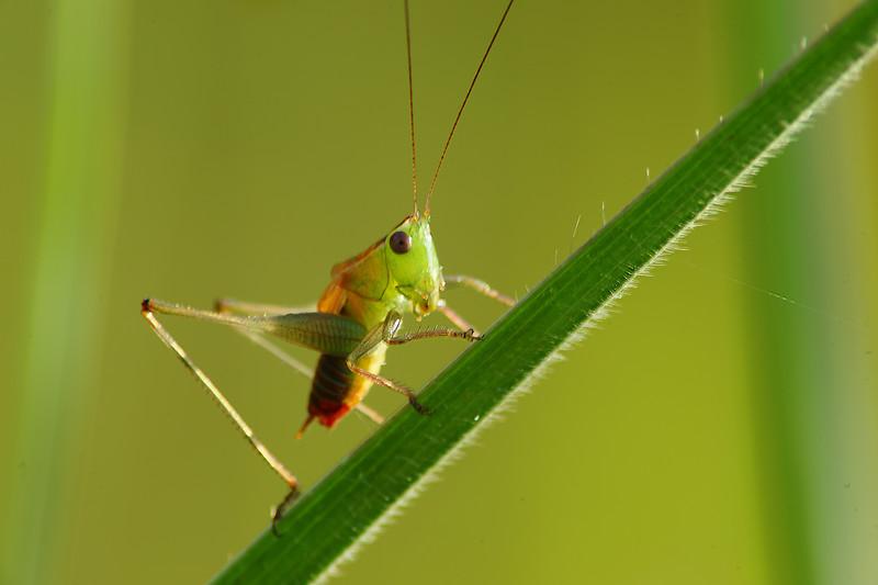 Bugs and Beetles - 15.jpg