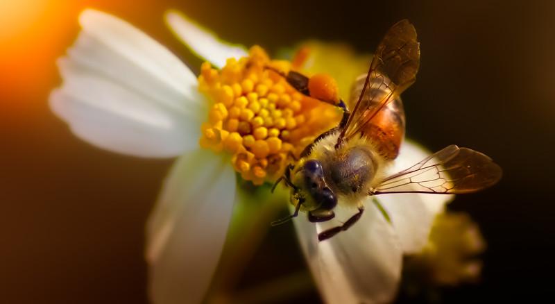 Bugs and Beetles - 97.jpg