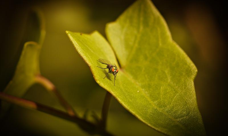 Bugs and Beetles - 195.jpg