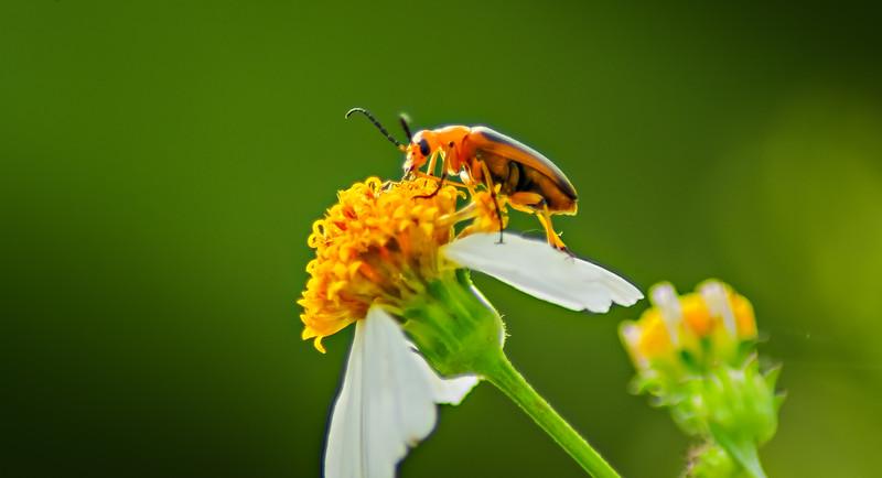 Bugs and Beetles - 155.jpg